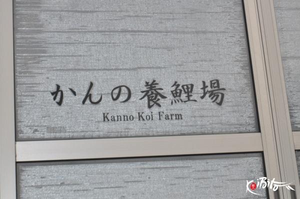 Kanno breeders koibito japan nishikigoi exporters for Koi farm near me